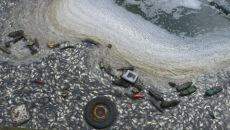 Śnięte ryby w śląskim stawie (Kontakt24/wojtix)