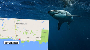 Atak rekina na australijskim wybrzeżu