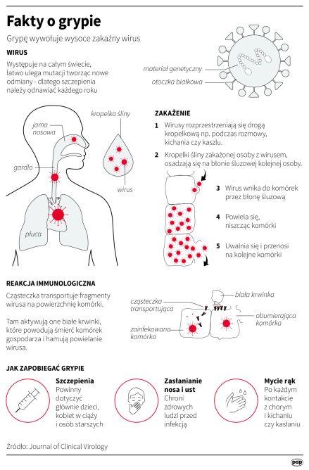 Fakty o grypie (Maciej Zieliński, Adam Ziemienowicz/PAP)