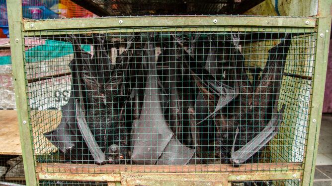 WHO: nie zalecamy likwidacji targów żywych zwierząt